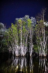 Shark River Slough at night.jpg