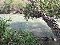 Sharyn River.jpg