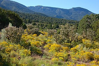 Magdalena Mountains - Magdalena Mountains and blooming chamisa at site of Kelly, New Mexico.