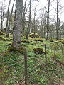 Skog i Ekhagen Vårgårda.jpg
