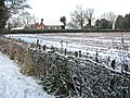 Snow on traditionally laid hedge - geograph.org.uk - 1653631.jpg