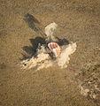 Soyuz TMA-08M landing (10).jpg