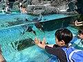Spheniscus humboldti, Toba Aquarium 2.jpg