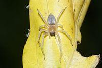 Spider 9216.jpg