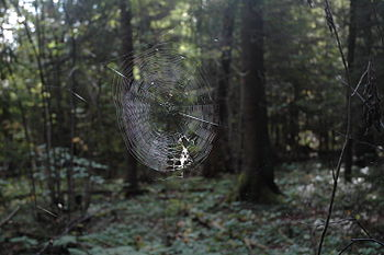 Spiders net in forrest