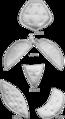SpirellaPads134.png