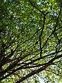 Spring green (8745623246).jpg