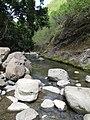 Starr-090720-3178-Syzygium cumini-habit view stream and swimmers-Iao Stream-Maui (24944062146).jpg
