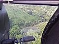 Starr-141014-2184-Caesalpinia decapetala-aerial view-Kakipi Gulch Haiku-Maui (24620389063).jpg