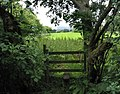 Stile and trees - geograph.org.uk - 885301.jpg