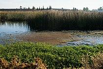 Stone Lakes National Wildlife Refuge 2.jpg