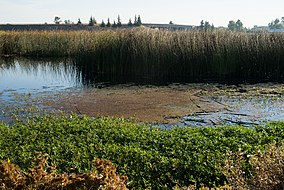 Stone Lakes National Wildlife Refuge 2.jpg
