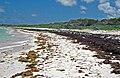 Strand lines on aragonite sand beach (Hanna Bay, northeastern San Salvador Island, eastern Bahamas) (15971029361).jpg