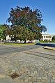 Strom na křižovatce ulic Palackého, Nádražní a Dukelská, Litovel, okres Olomouc.jpg