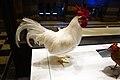 Stuffed rooster (39602017264).jpg