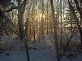 Sunset, Muskeg Creek trail system.JPG