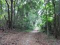 Sunset Nature Trail, Grassy Pond.JPG