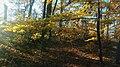 Sunwashed Yellow 1 (184486053).jpeg
