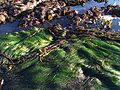 Surfgrass & feather boa kelp, North Moonstone SLO.jpg