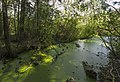Swamp Setka drainage canal. 0154.jpg
