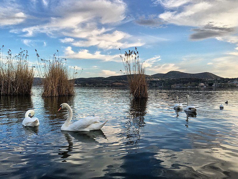 File:Swans in Oriestiada Lake.jpg