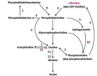 Citicoline - Enzymes involved in reactions are identified by numbers. See file description.