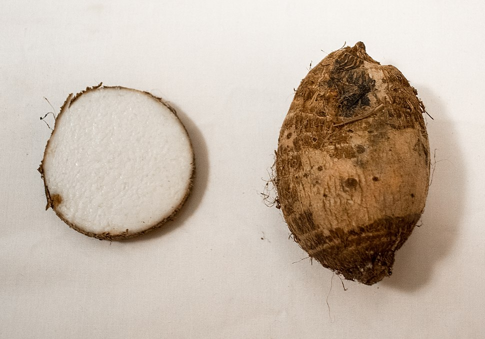 Taro root and crossection of taro root