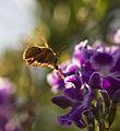 Teddy Bear Bees Picnic (6986740269).jpg