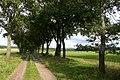 Tellmer Feldmark - geo.hlipp.de - 41506.jpg