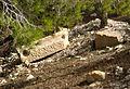 Temple, Sidi Khelifa, 28 septemnre 2013, (03).jpg