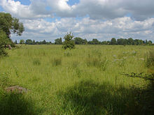 Thames floodplain (geograph 3025312).jpg