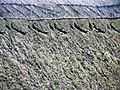 Thatch, Ley Arms, Kenn - geograph.org.uk - 1047448.jpg