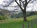 The Glen, Nr Innerleithin - geograph.org.uk - 46819.jpg
