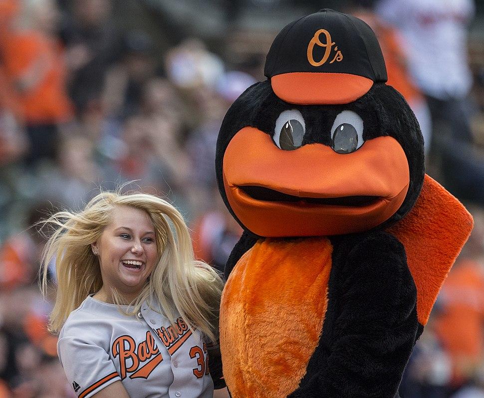 The Oriole Bird 2014