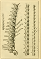 The Osteology of the Reptiles-126.png