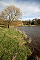 The River Tweed at Dryburgh - geograph.org.uk - 1202058.jpg