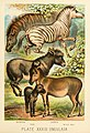 The animal kingdom; based upon the writings of the eminent naturalists, Audubon, Wallace, Brehm, Wood and others (1897) (17574318434).jpg