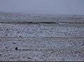 The first snow (244312229).jpg