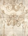 The pelvis of an articulated skeleton. Drawing, ca. 1560 (?) Wellcome L0027179.jpg