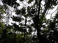 The rainforest in Eden.JPG
