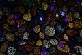The stones.jpg