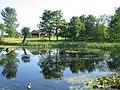 The village pond - geograph.org.uk - 179149.jpg