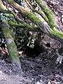 Tierbau am Honigbuck im Freiburger Mooswald.jpg