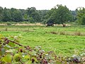 Tilling Bourne Valley - geograph.org.uk - 547203.jpg