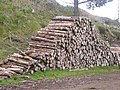 Timber stack awaiting collection - geograph.org.uk - 433051.jpg