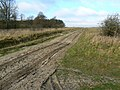 Track, Imber Firs, Wiltshire - geograph.org.uk - 1094020.jpg