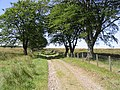 Track near Newbigging Farm - geograph.org.uk - 533138.jpg