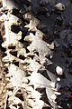 Tree-Bark-Spikes-8646.jpg