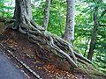 Tree Root (1507600328).jpg