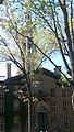 Tree bilding.jpg